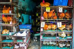 Markt in Guangzhou (Joerg1975) Tags: guangzhou china lumix asia asien panasonic guangdong asie  kina f28 sina cina canton chine     dmclx1  provinz  kanton in  copyrightprotected  panasonicdmclx1