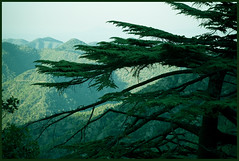 cedar foreground (-Filippos-) Tags: mountains tree green forest landscape cyprus cedar paphos kypros dasos     abigfave  vouna superbmasterpiece diamondclassphotographer