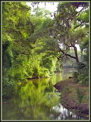 Hilton Head, South Carolina (h_roach) Tags: reflections southcarolina explore swamp hiltonhead naturesfinest flickrsbest mywinners abigfave holidaysvacanzeurlaub diamondclassphotographer flickrdiamond
