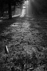 Primeros Rayos de luz IV / First light rays IV (Luis Marn) Tags: trees blackandwhite bw espaa naturaleza sun white black blancoynegro blanco luz nature geotagged andaluca spain rboles europa europe arboles minolta marin negro andalucia bn sierra espana bosque granada luis andalusia gran 2007 rayos haz 1870 rayosdeluz marn maxxum5d dynax5d radamantis konicaminoltadynax5d radamanthys minoltaafdt1870f3556d rayslights lumaro geoetiquetada parquenaturaldelasierradehutor 070923040