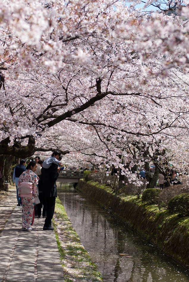 京都.追櫻