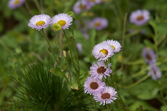 Wildflowers Photo