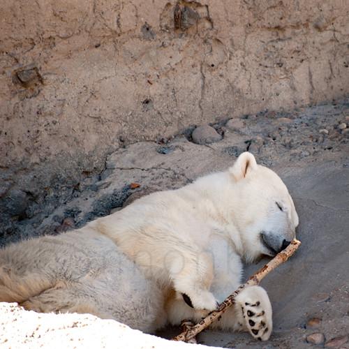 bear & stick