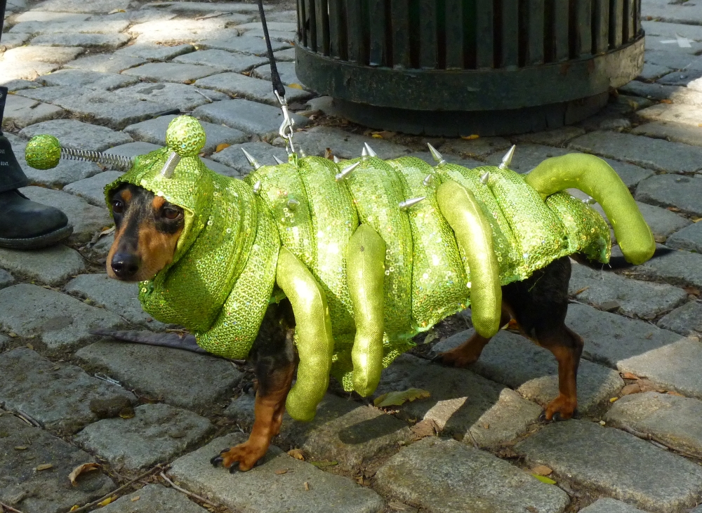 Caterpillar Dog