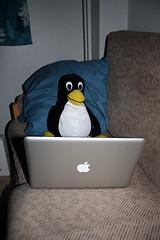 #13 Kokeilunhaluinen pingviini