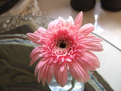 Gerbera before HDR