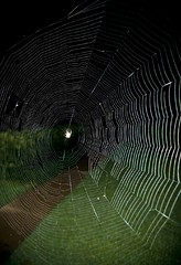 The spiders art (nivek2002) Tags: macro spider scary little web arachnid awesome insest
