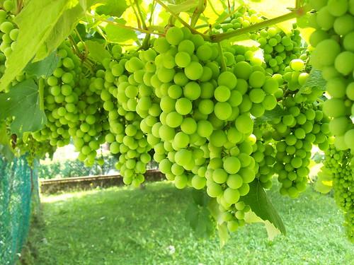 Vinoterapia: il vino alleato del nostro benessere