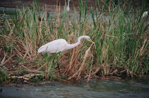 Uganda - QENP Rich Bird Life 9