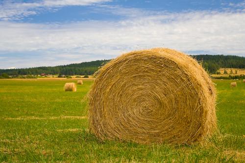 http://farm2.static.flickr.com/1082/899115348_0125b4fce3.jpg