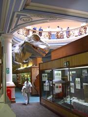 durban natural history museum - dinosaur