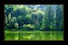 Nyári semmiség (szefi) Tags: summer vacation holiday flower color colour tree green sunshine vegetation erdély harghita transsylvania nikonstunninggallery hargita mywinners fiveflickrfavs wonderfulworldmix