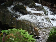 DSC05469 (shineoon1) Tags: waterfall hiking yanming