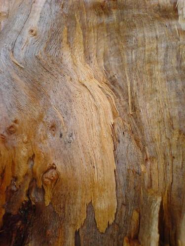 Exposed wood