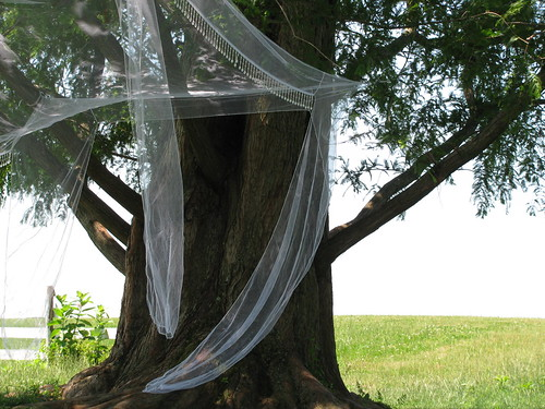 tree veiled