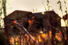 Shack by the hedge (An Lionsa) Tags: canada abandoned barn rural edmonton farm ruin farmland alberta prairie prairies creon tofield ciarantwomey anlionsa