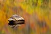 Reflections (JGo9) Tags: park autumn color reflection fall water rock canon season eos rebel kentucky ky beerock pulaskicounty t1i whitlelilly