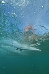 score ! (bluewavechris) Tags: ocean sea water hawaii surf underwater action board wave maui fin swell seasea uwhousing t1i