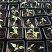 """youngplants2 • <a style=""""font-size:0.8em;"""" href=""""http://www.flickr.com/photos/52479745@N06/5126178143/"""" target=""""_blank"""">View on Flickr</a>"""