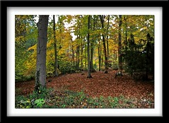 FOREST (mark_rutley) Tags: autumn trees tree fall leaves forest hampshire forestofbere