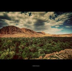 Oasis (Feo David) Tags: africa sky mountain canon palms eos morroco oasis maroc marocco 5d mm ouarzazate 1740 palmier marrocco afrique morrocco maroco