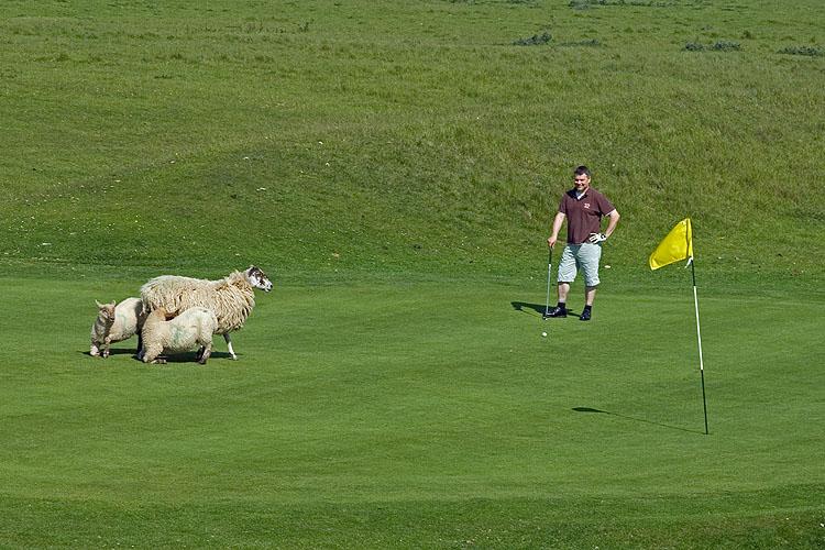 Bemused Golfer