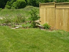 The new garden