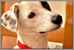 Do You Remember Chicca? (krisdecurtis) Tags: portrait italy dog dogs cane canon interestingness bravo italia 300d campania canon300d sweet adorable story dolce pirate kris pup wound ritratto pirata 2007 cucciolo chicca storia maddaloni ferita adorabile krisdecurtis superaplus aplusphoto superhearts
