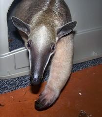 Anteater cabin
