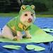 dog-costume-frog