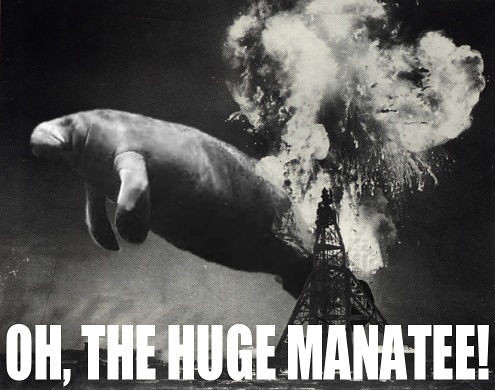 Manatee.  Big .. manatee by you.