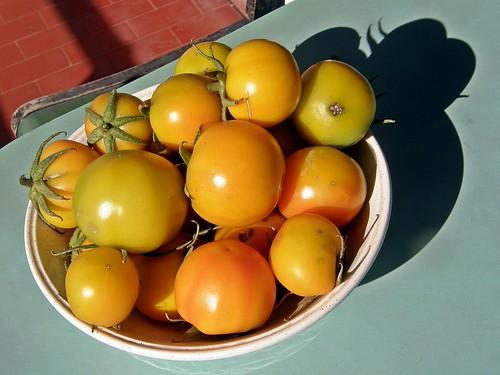 tomates de Nerina