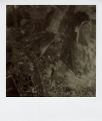 flora, jungle room (a-mills) Tags: film analog polaroid instant botanicgarden slr680 px600
