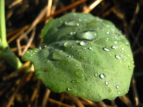 garden #2485: after watering