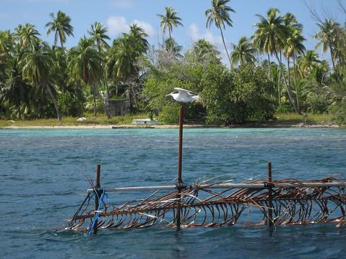 Fish park guest, Tetmanu