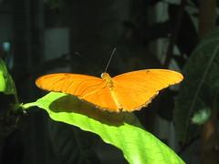 Da Orange Butterfly - by nick4900