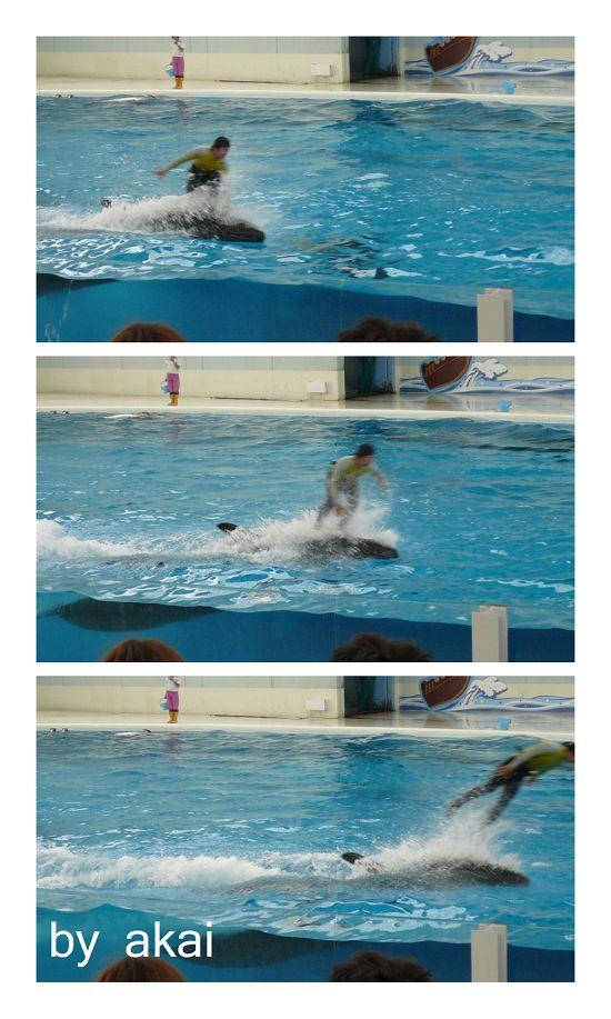 海豚1.jpg
