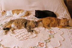 Synchronized snoozing (bernard & theresa) Tags: new family pet cats black animal cat george kitten feline funny tammy spike funnycats creamsicles kissablekat