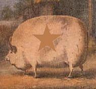 Porkus star