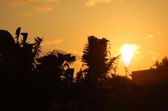 椰子と夕日