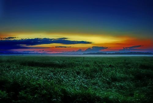 Marsh on a foggy evening