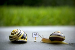 For Sale / For Snail (ukaaa) Tags: shells macro home grass sign digital for sale shell snail sonia snails notphotoshopped snailshell slimey snailshells