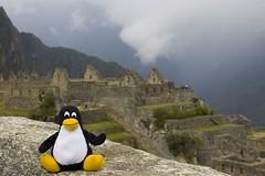 Machu Picchu: Penguin!