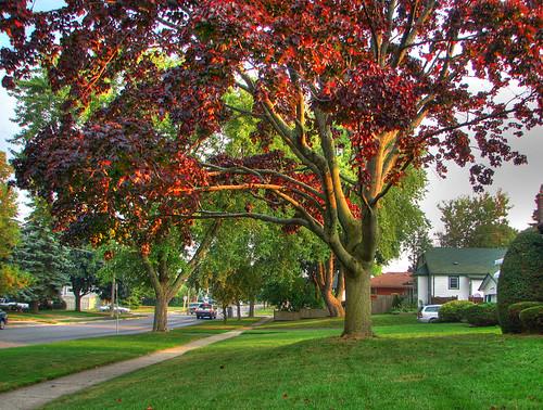 Tree [2]