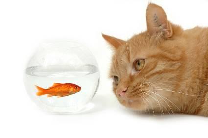 Coma Peixe!