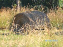 Bale of round hay