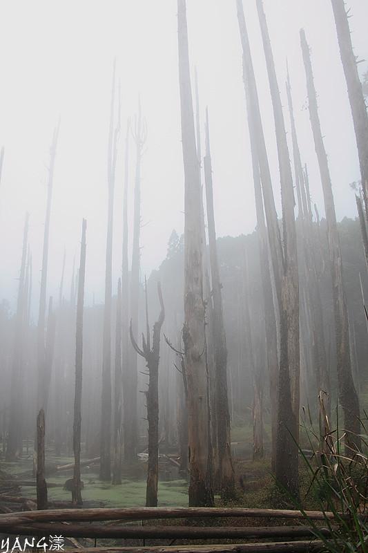 也來個忘憂森林