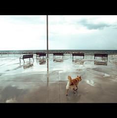 CARTESIAN COORDINATE (Elena Fedeli) Tags: sea italy dog wet rain cane italia mare waterfront horizon cemento pioggia lungomare puglia frontside orizzonte panchine apulia assi bohigas moladibari assicartesiani
