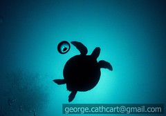 turtle silhouette (fins'n'feathers) Tags: photo ecuador underwater turtle contest scuba diving galapagos 2008 archipelago facebook naturesfinest top20fish alemdagqualityonlyclub orcadivers