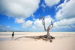 The lone tree at Harbour Island/Eleuthera/Bahamas (photos_mweber) Tags: bahamas eleuthera lonetree harbourisland lonetreebahamas